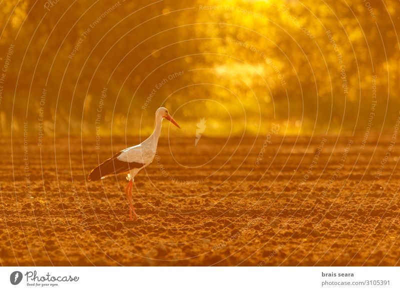 White Stork Nature Summer Beautiful Animal Calm Warmth Yellow Environment Natural Freedom Bird Earth Wild Field Weather Europe