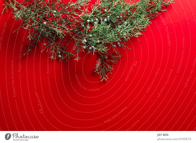 Pine branches on red background, Nature christmas concept Christmas & Advent Green Red Tree Winter Happy Feasts & Celebrations Design Decoration Bright Table