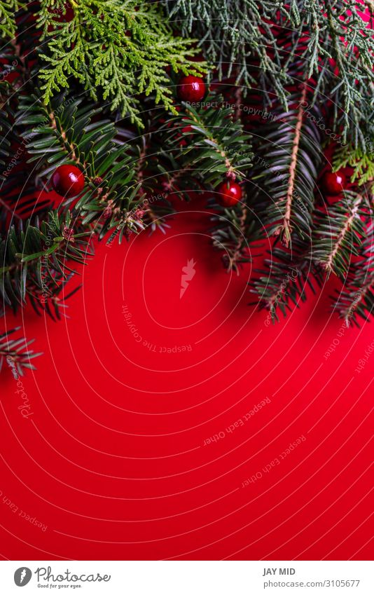 Creative layout made of Christmas tree branches red background Christmas & Advent Plant Green Red Tree Leaf Winter Happy Feasts & Celebrations Style Design