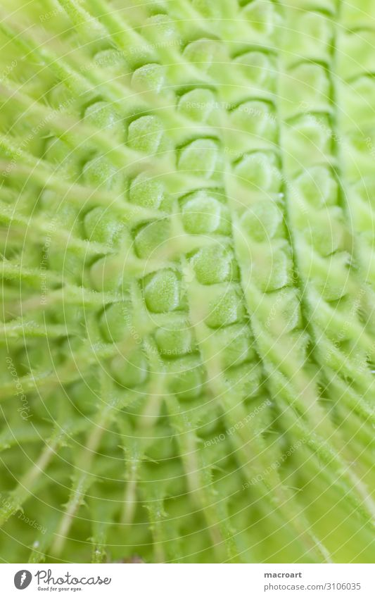 succulent in detail Succulent plants Macro (Extreme close-up) Plant Close-up Green Colour photo Thorn Detail Exotic Structures and shapes Point Thorny