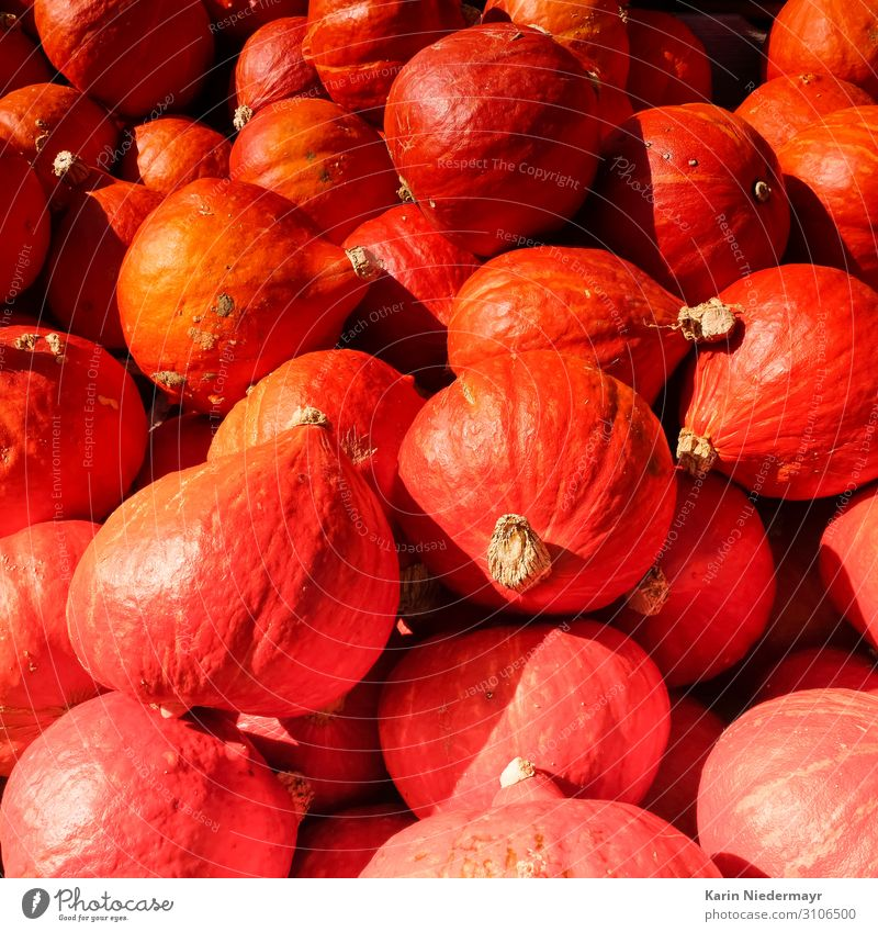 Pumpkins / Pumpkin Food Vegetable Nutrition Dinner Vegetarian diet Pumpkin time Thanksgiving Hallowe'en Crops Autumn Shopping Eating Orange Red Edible
