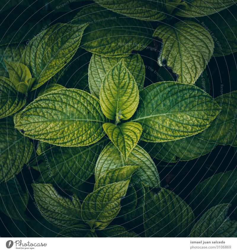 green plant leaves textured backgroun in the garden Plant Leaf Green Garden Floral Nature Natural Decoration Abstract Consistency Fresh Exterior shot