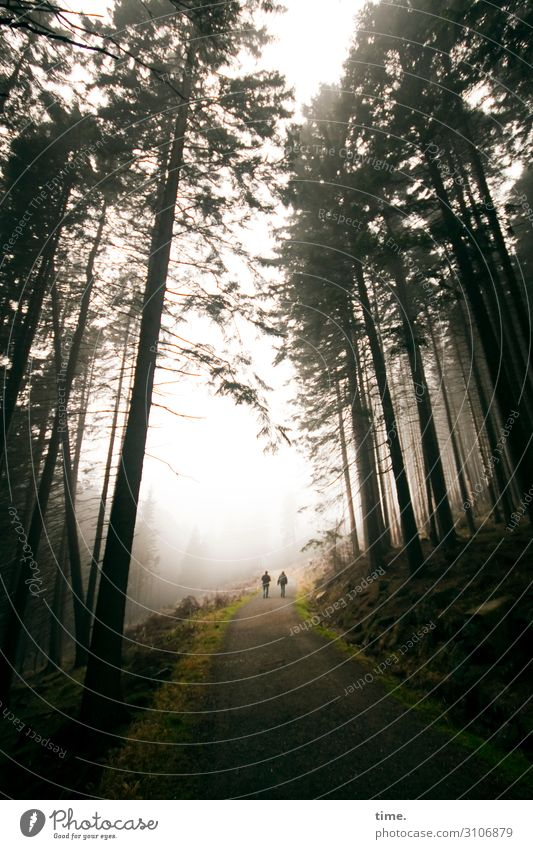 through the woods. 2 Human being Environment Nature Landscape Sky Autumn Fog Plant Flower Coniferous trees Coniferous forest Forest Mountain Harz Relaxation