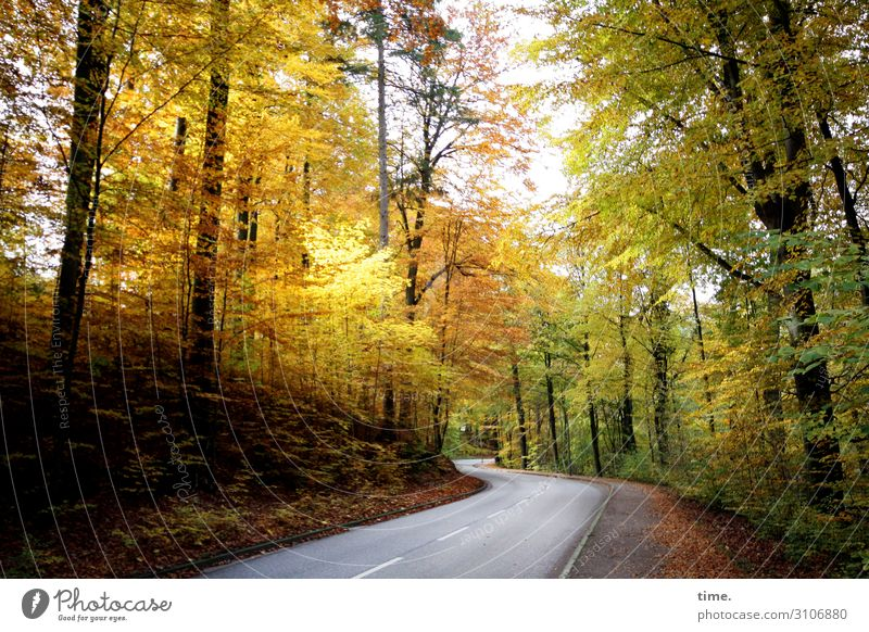 Vacation & Travel Nature Plant Landscape Tree Relaxation Forest Street Autumn Yellow Environment Lanes & trails Movement Gray Moody Transport