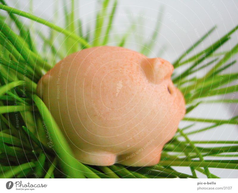 pig Swine Animal Miniature Grass Pink Green Things Marzipan