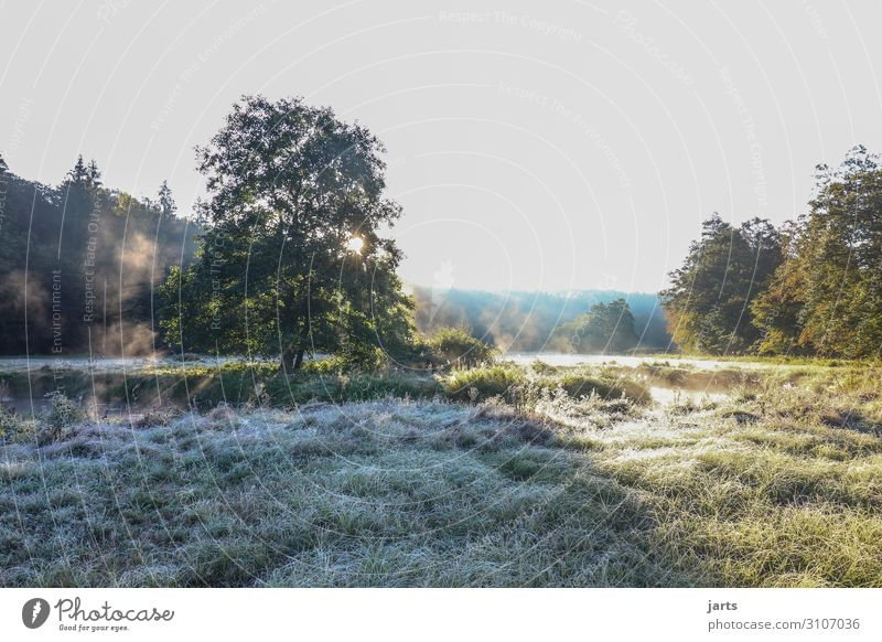 Early in the morning Environment Nature Landscape Sky Cloudless sky Sunrise Sunset Autumn Beautiful weather Ice Frost Tree Grass Forest River bank Fresh Bright