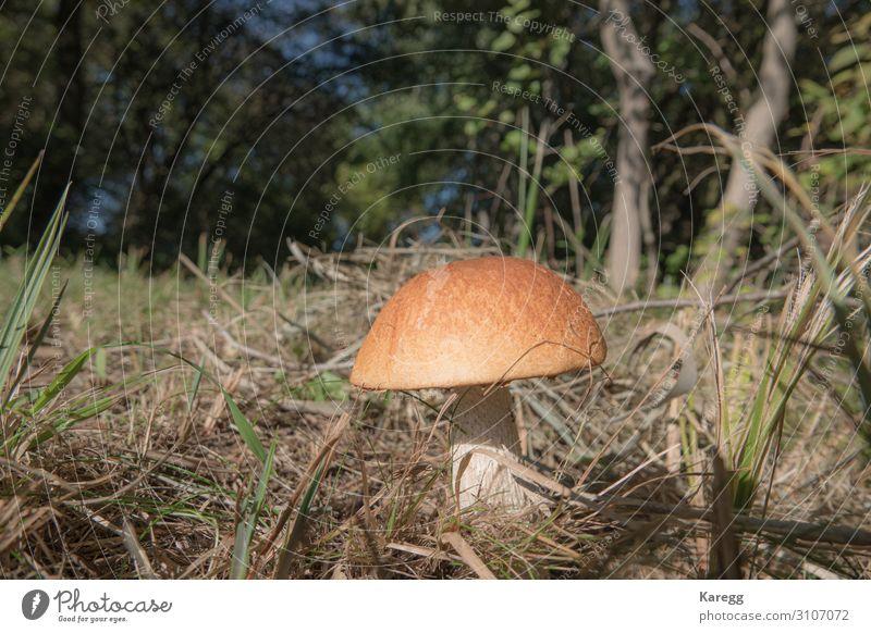 Human being Nature Plant Joy Healthy Food Lifestyle Brown Nutrition Fresh Vegetable Mushroom Light painting Boletaceae
