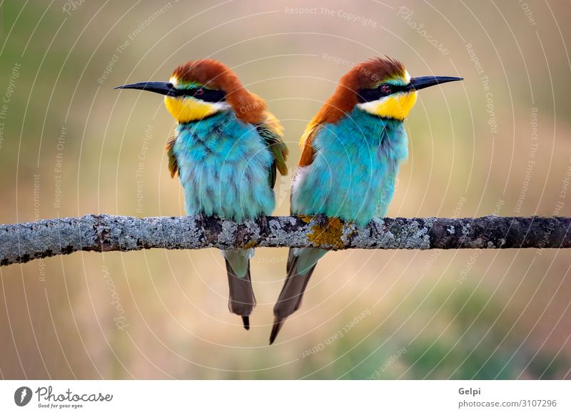 Love on the branch Exotic Beautiful Freedom Partner Environment Nature Animal Park Bird Bee Kissing Small Wild Blue Yellow Green Red Colour Attachment wildlife