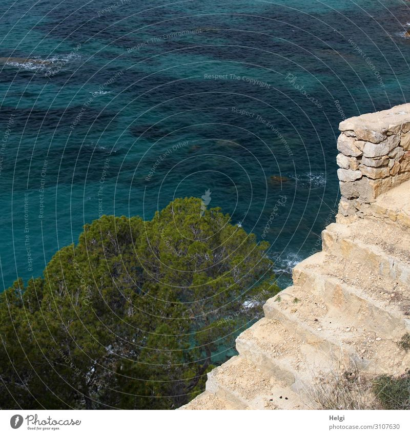 old stone stairs leading down to the sea Environment Nature Plant Water Spring Tree Coast Bay Ocean Mediterranean sea Island Majorca Wall (barrier)