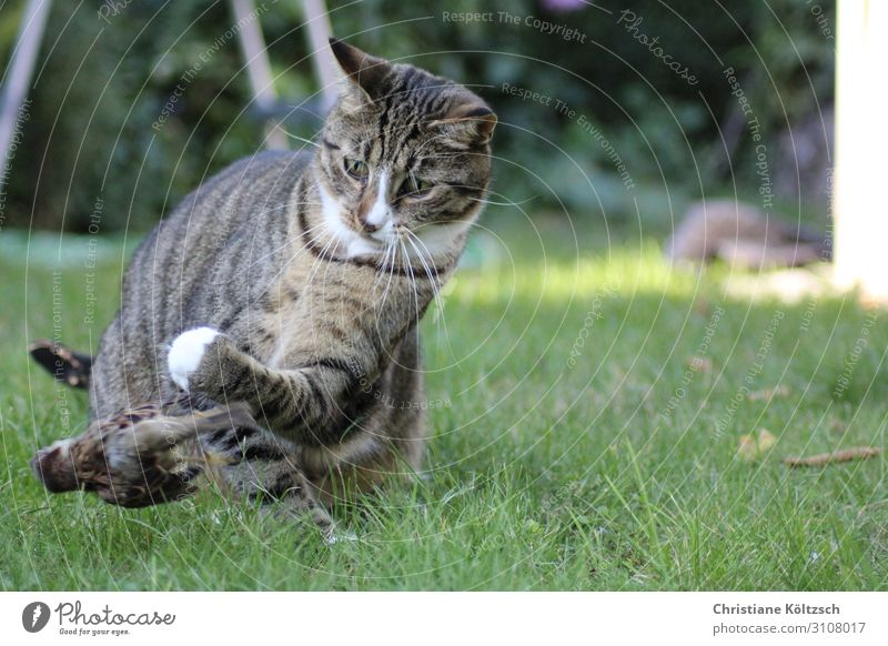 Fly bird fly Nature Summer Grass Garden Meadow Pet Cat Bird Paw 2 Animal Observe Discover Hunting Looking Success Appetite Colour photo Exterior shot Day