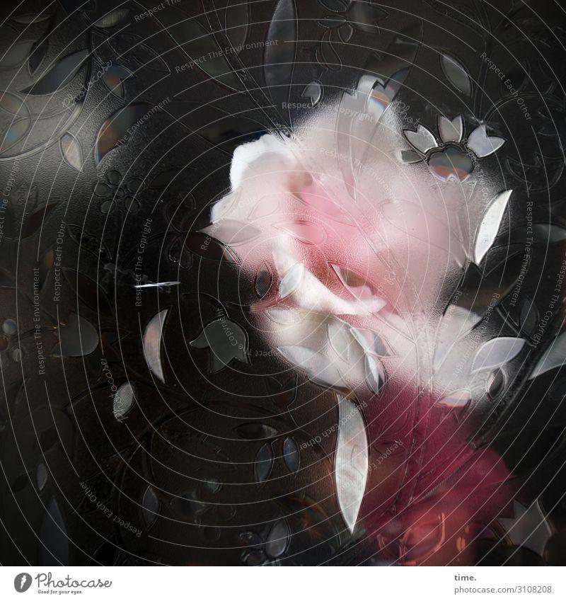 Roxy Music Flower Blossom Window Pane Shop window Decoration Packing film Design Pennate Exceptional Creepy Protection Timidity Mistrust Esthetic Bizarre