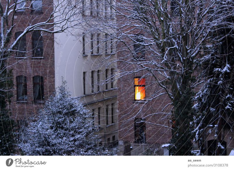 cocooning Flat (apartment) House (Residential Structure) Lamp Christmas & Advent New Year's Eve Environment Landscape Autumn Winter Weather Snow Tree Town