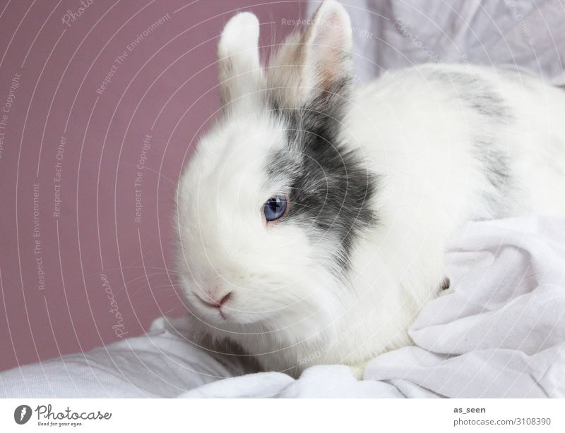 Blue White Animal Calm Emotions Small Pink Infancy Sit Esthetic Authentic Cute Easter Soft Pure Pet