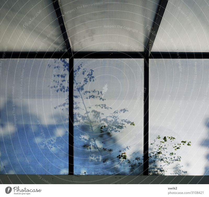 leaf canopy Plant Tree Twig Leaf Window Glass Movement Hazy Skylight Petrol station Colour photo Subdued colour Exterior shot Structures and shapes
