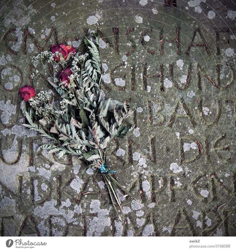 walked Tombstone Inscription Rose Bouquet Stone Characters Lie Old Dry Under Sadness Concern Grief Death Longing Loneliness Eternity Decline Transience Lose