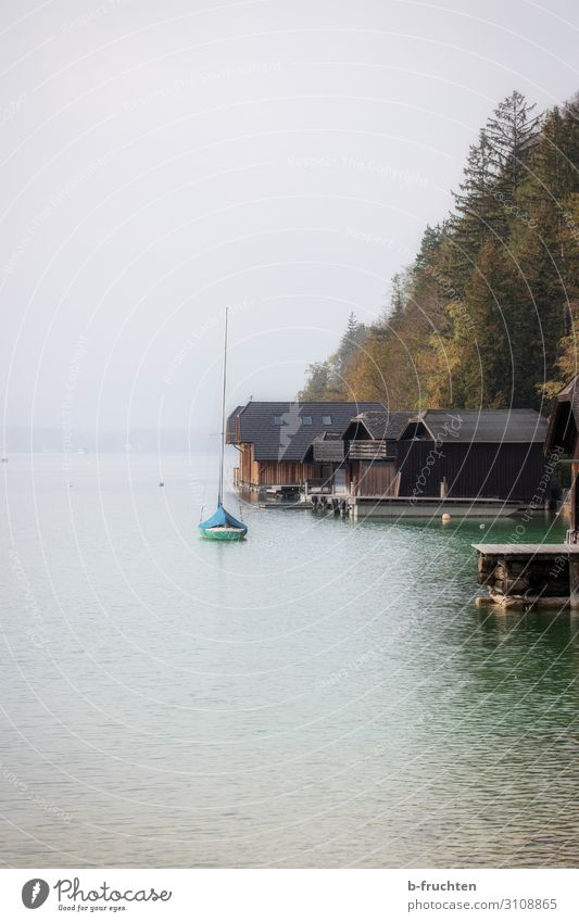 Peace at the lake Autumn Bad weather Fog Tree Forest Lake Hut Loneliness Nature Boathouse Watercraft Lake Wolfgang Calm Colour photo Exterior shot Deserted Day