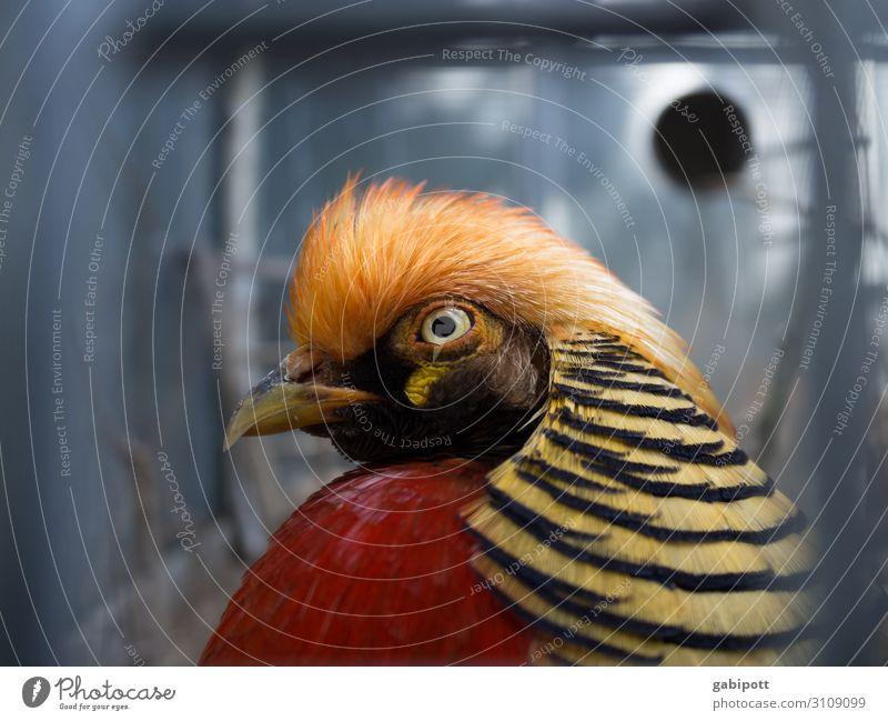 Nature Colour Beautiful Animal Funny Bird Design Happiness Creativity Joie de vivre (Vitality) Uniqueness Exotic Bizarre