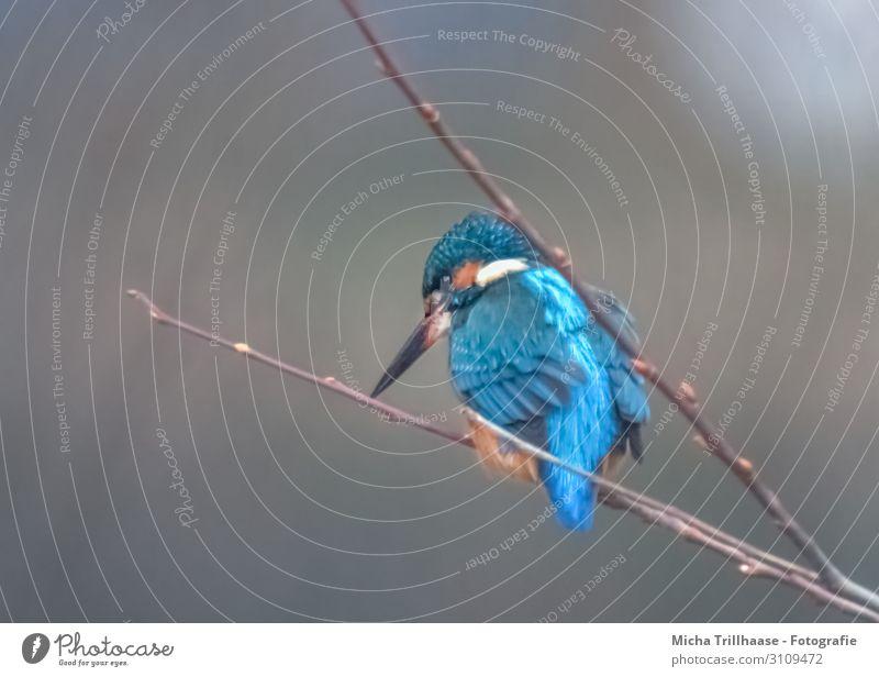 Nature Blue White Animal Black Eyes Lake Orange Bird Illuminate Glittering Wild animal Feather Beautiful weather Wait Wing