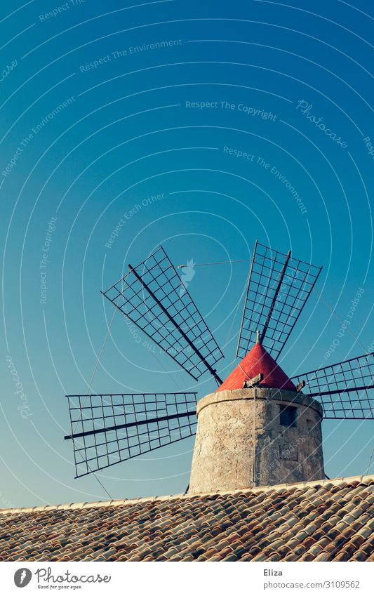 windmill Windmill Blue Blue sky Cloudless sky Roofing tile Agriculture Summer Rural Colour photo Exterior shot Deserted Copy Space top Day