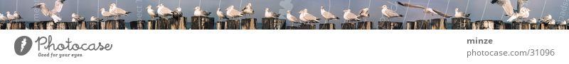 Ocean Beach Animal Bird Flying Pole Movement Bird's colony