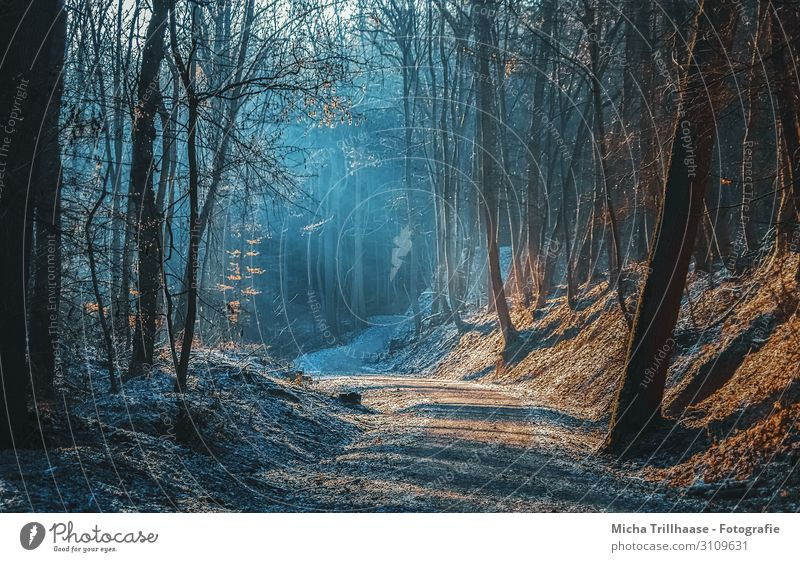Sunbeams on the forest path Nature Landscape Plant Sky Sunlight Autumn Winter Beautiful weather Tree Forest Relaxation Illuminate Hiking Natural Blue Brown