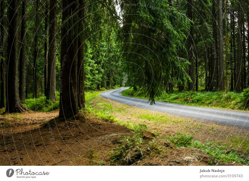 Road Through Forest Environment Nature Spring Tree Wood Observe Hiking Authentic Natural Wild Green Contentment Adventure Expectation Mysterious Calm