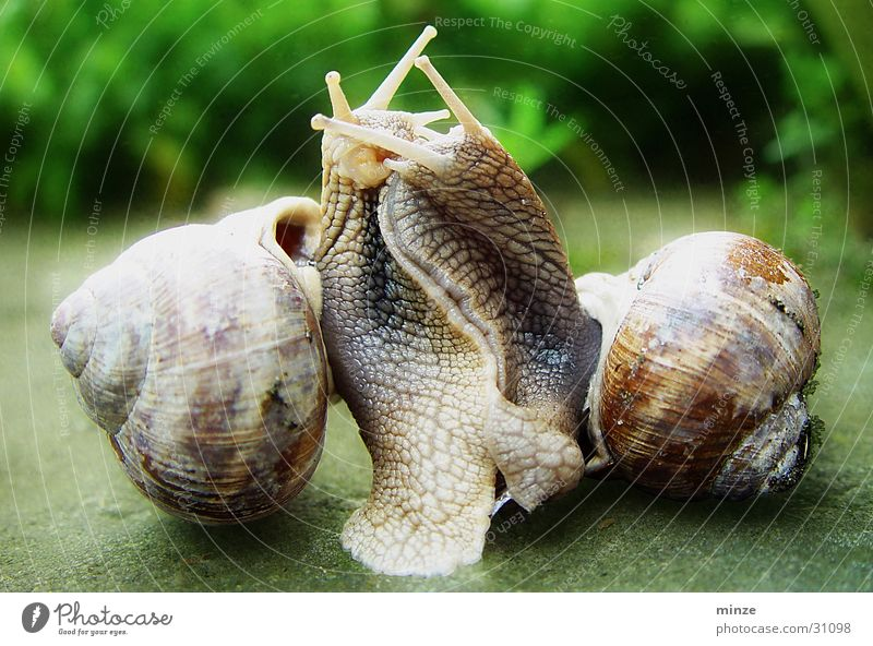 Emotions Muddled Snail Snail shell