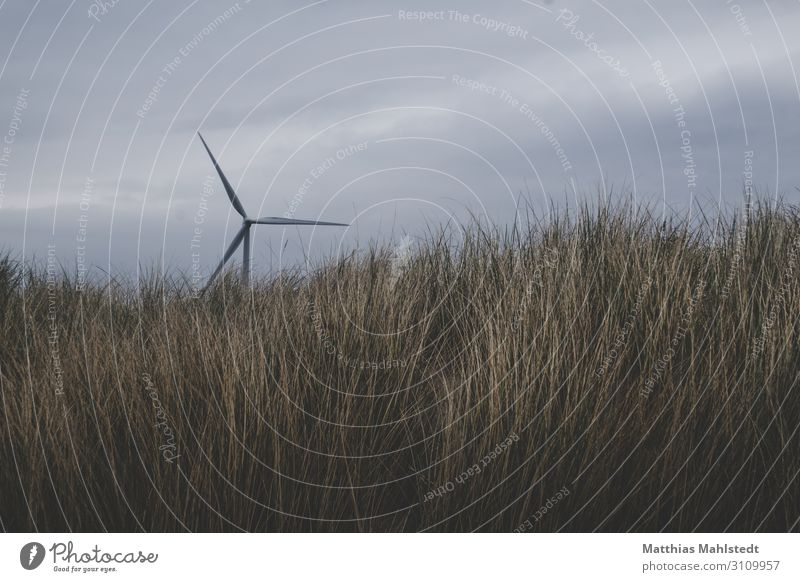 wind power Technology Energy industry Renewable energy Wind energy plant Environment Nature Landscape Sky Grass Coast Movement Rotate Sustainability Natural