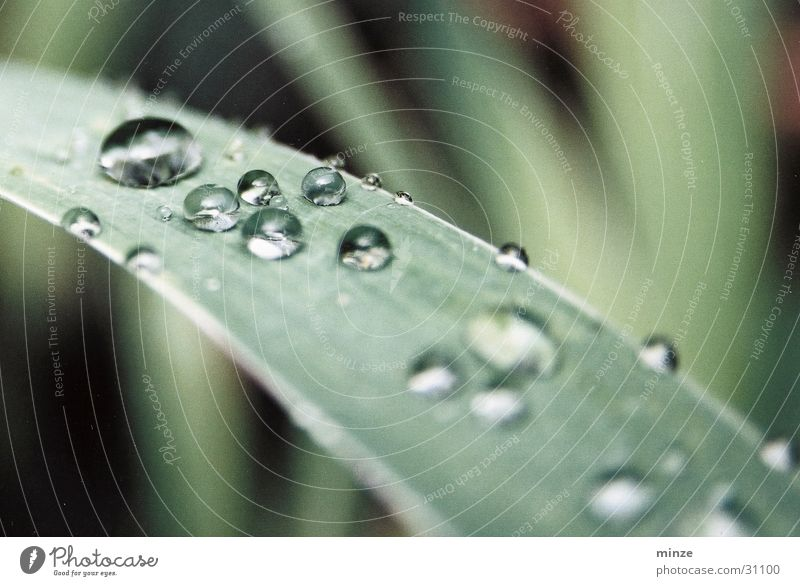 morning dew Dew Drops of water Green Leaf Glittering Plant Maturing time Growth