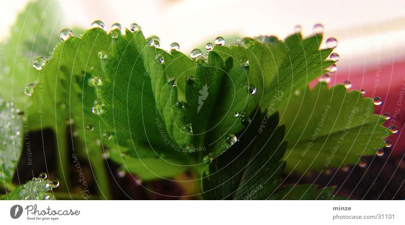 Plant Green Water Glittering Drops of water Chain Strawberry Fruit