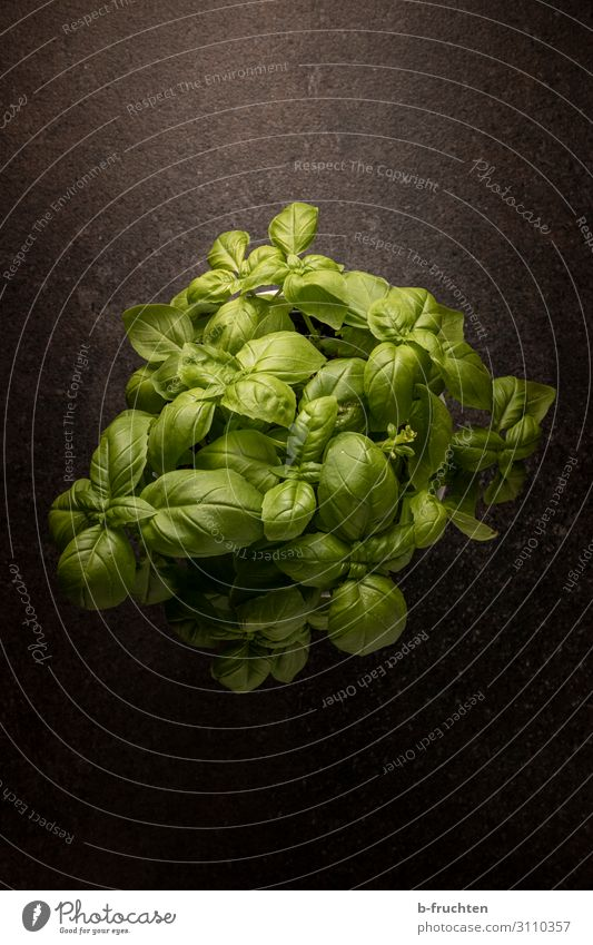 basil Food Herbs and spices Organic produce Vegetarian diet Italian Food Healthy Eating Plant Pot plant Select To enjoy Dark Fresh Green Basil Basil leaf Spicy