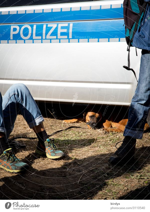 A dog is looking for shadows under a police emergency vehicle. Writing police police deployment 18 - 30 years Human being 2 Youth (Young adults) Adults