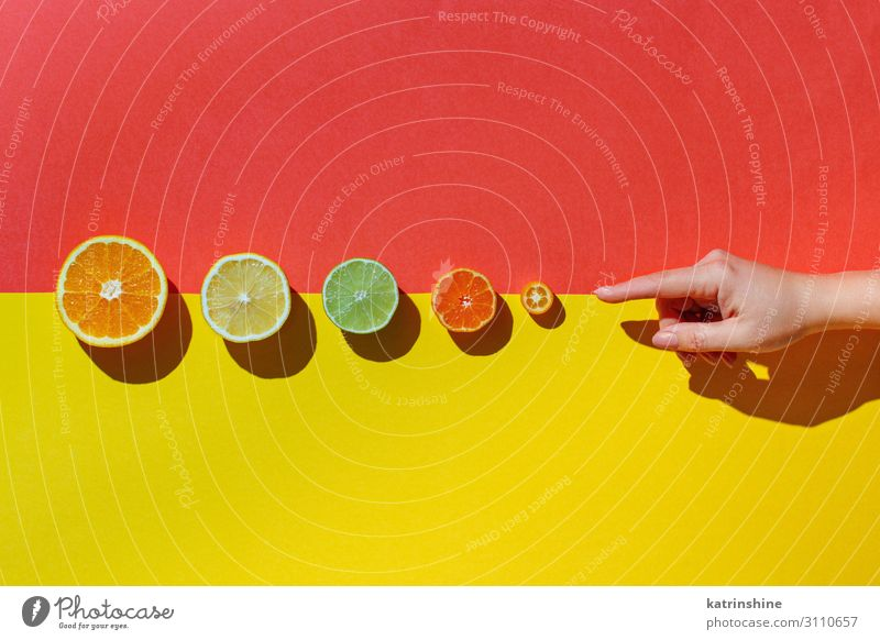 Citrus fruits on a coral red background Fruit Nutrition Vegetarian diet Diet Exotic Summer Hand Group Fresh Modern Natural Juicy Yellow Red Colour citrus