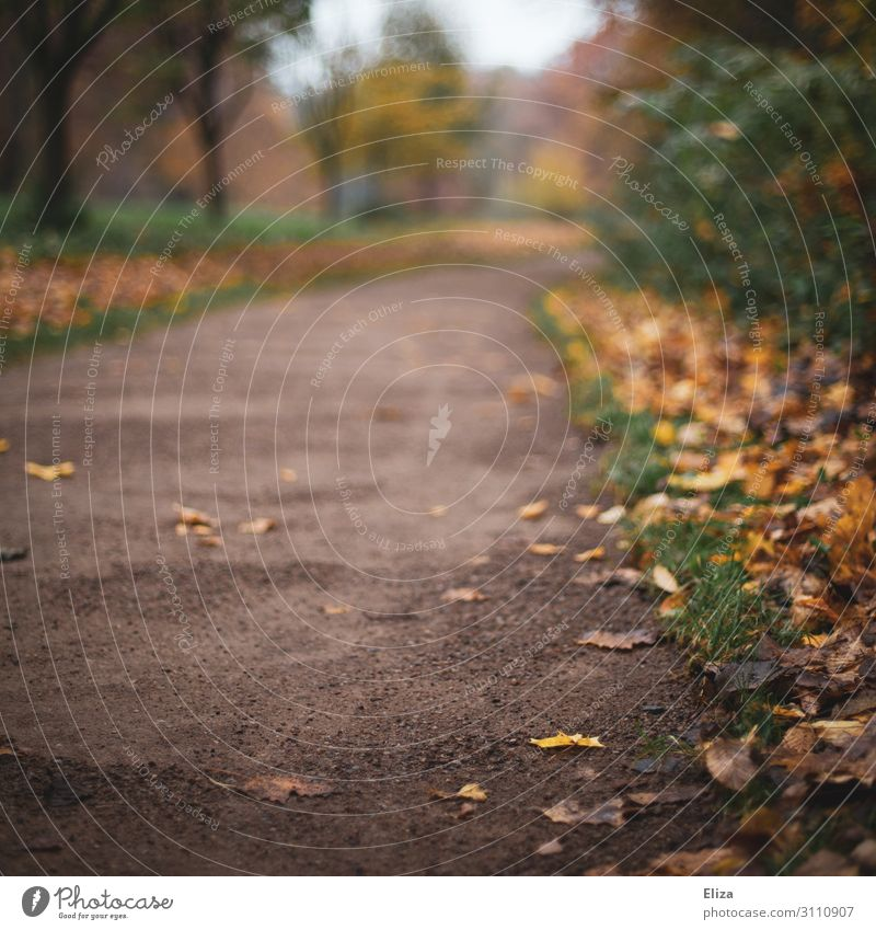 autumn trail Nature Autumn Leaf Park Forest Change Target Wayside Autumnal Mud Yellow Seasons Promenade Colour photo Exterior shot Copy Space left