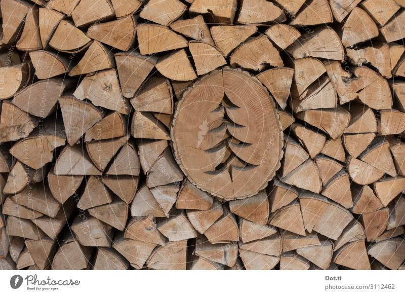fretwork Wood Brown Firewood Stack clever Christmas tree Decoration Tree section Colour photo Subdued colour Exterior shot Deserted Deep depth of field