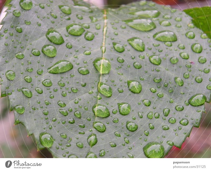 Water Green Leaf Rain Drops of water Wet Damp Lens Enlarged