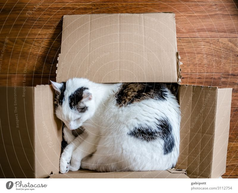box sleeper Animal Pet Cat 1 Sleep Cuddly Relaxation Cozy Crate Cardboard Characteristic Colour photo Subdued colour Interior shot Close-up Deserted