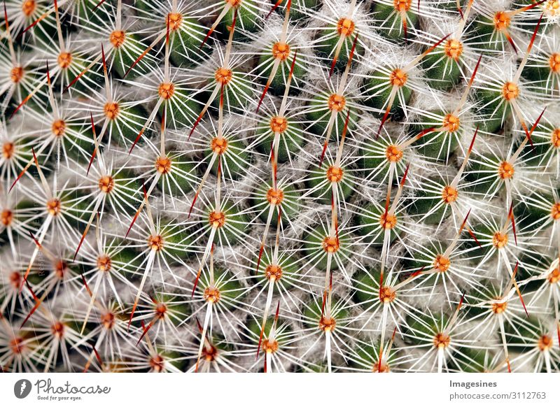 "Cactus - And it pricks pricks Nature Plant Exotic Thorny Multicoloured Pain ""Thorns cate Close-up background full screen Abstract Beautiful botanical Botany"