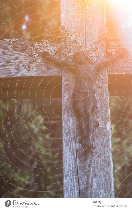 Human being Loneliness Wood Religion and faith Sadness Feasts & Celebrations Death Power Hope Easter Belief Christian cross Crucifix Appetite Christianity