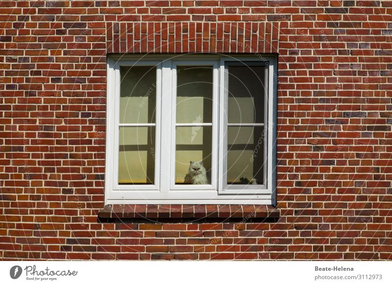 Cat Town Beautiful House (Residential Structure) Window Lifestyle Facade Living or residing Flat (apartment) Esthetic Joie de vivre (Vitality) Wait Cute Observe