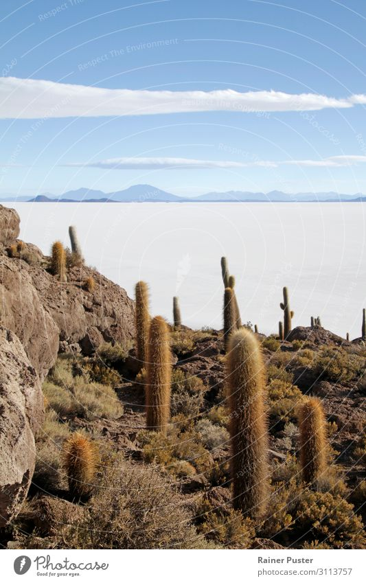 A rock island with cacti in the salt desert Uyuni in Bolivia Sand Sky Hill Mountain Desert Salt flats Salar de Uyuni South America Blue White Freedom Horizon