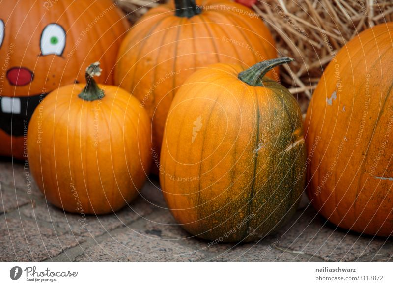 Pumpkins on the market Food Vegetable Nutrition Organic produce Vegetarian diet Lifestyle Shopping Feasts & Celebrations Thanksgiving Hallowe'en Gardening