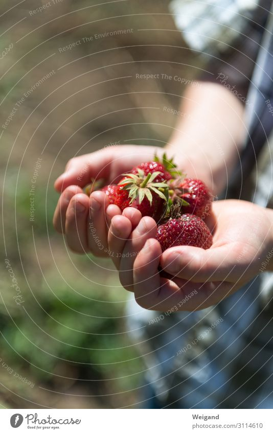 strawberry happiness Food Fruit Nutrition Organic produce Vegetarian diet Diet Slow food Joy Senses Fragrance Child Boy (child) 1 Human being Delicious Grateful