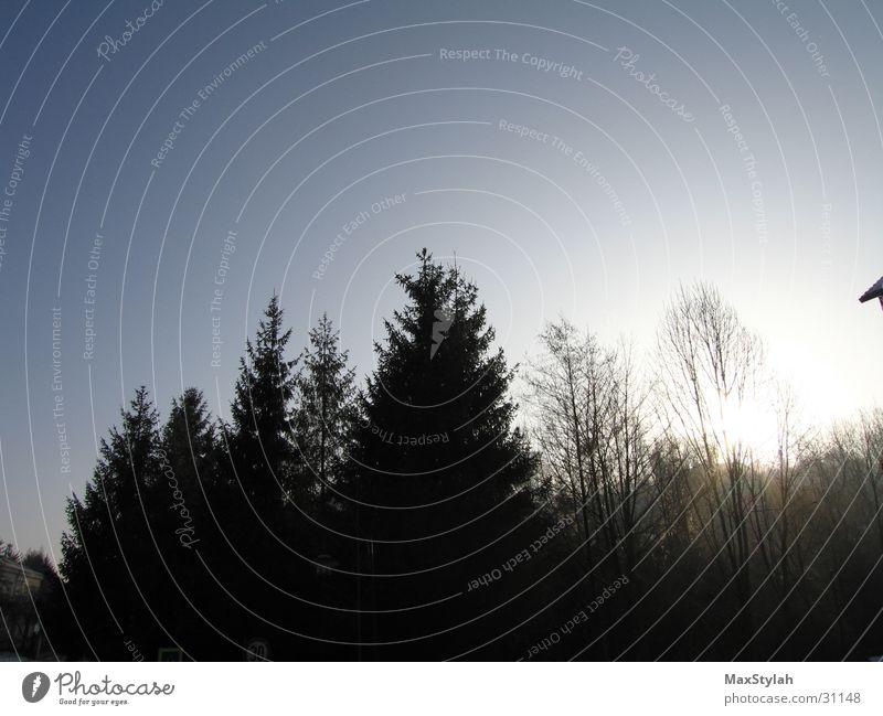 night seesaw Tree Afternoon Progress Calm 7 Sun Sky Nature