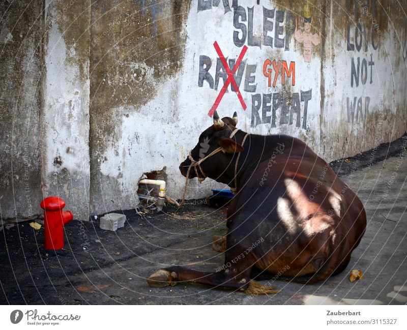 Red Animal Calm Graffiti Warmth Wall (building) Wall (barrier) Brown Gray Contentment Belief City trip Serene Trust Exotic Cow
