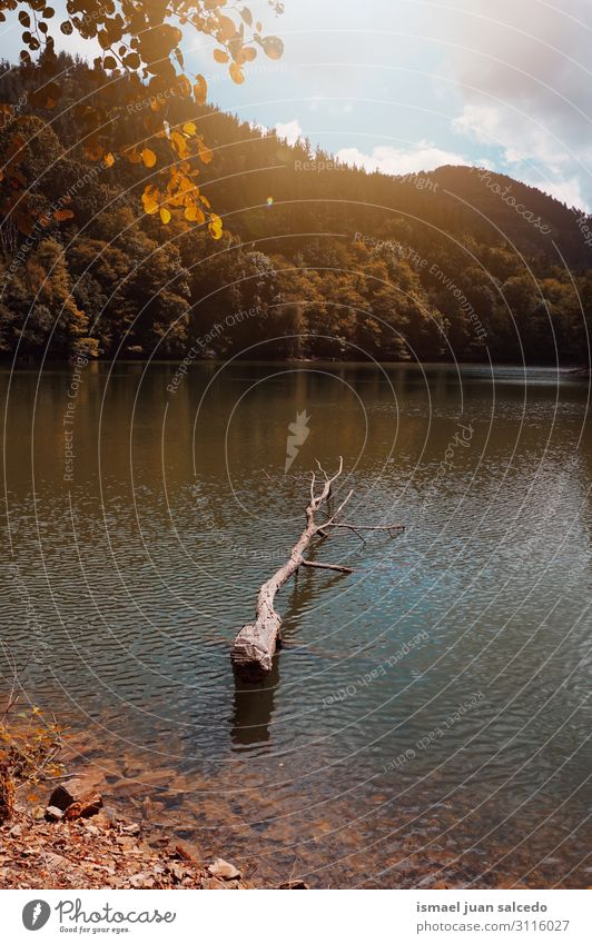 trees with autumn colors in the lake in autumn season Lake Water Tree Trunk Brown Red Leaf Branch Forest Mountain Nature Landscape Exterior shot