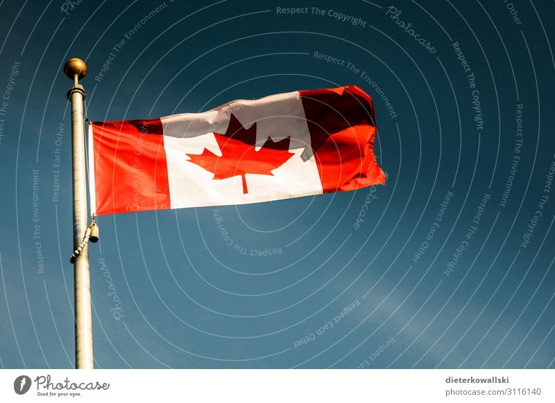 banner Flag Pride Canada Flagpole Maple tree Patriotism Identity Identify Colour photo Exterior shot Deserted Day