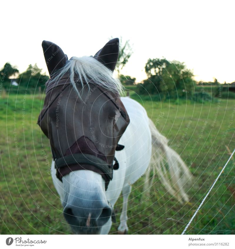 Veil-like horse Animal Pet Horse Contentment Willpower Determination Love of animals Curiosity Interest Uniqueness Exotic Threat Society Health care Kitsch