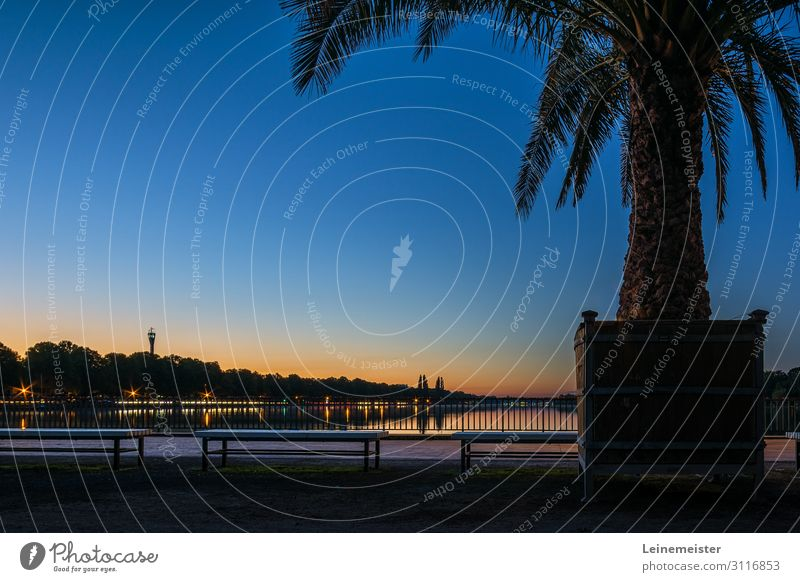 palm Relaxation Calm City trip Environment Cloudless sky Beautiful weather Plant Exotic Lakeside Hannover Germany Blue Maschsee Lower Saxony North bank