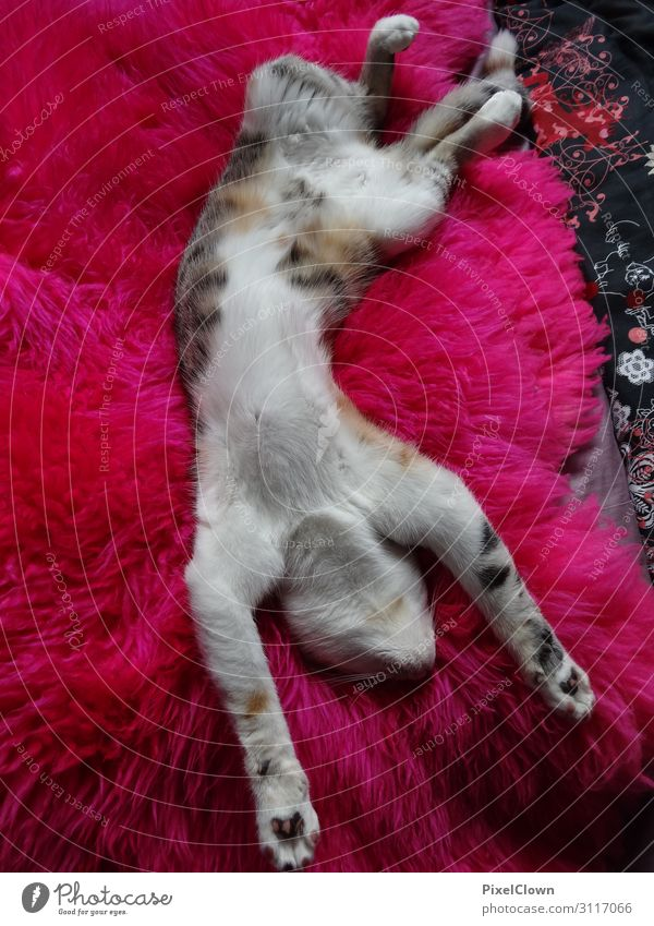Sleeping cat Lifestyle Living or residing Animal Pet Cat 1 Crazy Beautiful Pink Red Moody Colour photo Interior shot Detail Animal portrait
